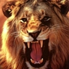 Avatar di Roar