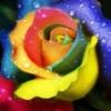 /~shared/avatars/12012195077110/avatar_1.img