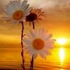 /~shared/avatars/13379100033924/avatar_1.img