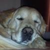 /~shared/avatars/13764447439861/avatar_1.img