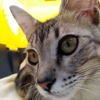 Avatar di Leo The Cat