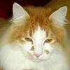 /~shared/avatars/18514356949634/avatar_1.img