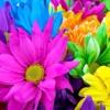 /~shared/avatars/21095776353216/avatar_1.img