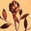 /~shared/avatars/22973464912932/avatar_1.img
