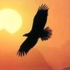 /~shared/avatars/25336458535862/avatar_1.img