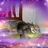 /~shared/avatars/27959326021749/avatar_1.img