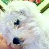 /~shared/avatars/31594738797074/avatar_1.img