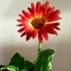 /~shared/avatars/32520379421172/avatar_1.img