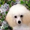 /~shared/avatars/32876012334252/avatar_1.img