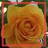 /~shared/avatars/33366768711237/avatar_1.img