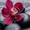 /~shared/avatars/35380366908032/avatar_1.img