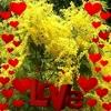/~shared/avatars/36825098375586/avatar_1.img