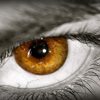 /~shared/avatars/36965195793345/avatar_1.img