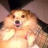 /~shared/avatars/37056378098954/avatar_1.img