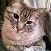 /~shared/avatars/37128029652027/avatar_1.img
