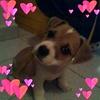/~shared/avatars/37255140797606/avatar_1.img