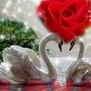 /~shared/avatars/39953886900420/avatar_1.img