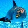 /~shared/avatars/42513919536594/avatar_1.img
