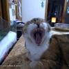 /~shared/avatars/46149664255616/avatar_1.img