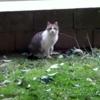 /~shared/avatars/52377525485076/avatar_1.img