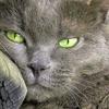 /~shared/avatars/53501237553782/avatar_1.img