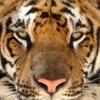 /~shared/avatars/54511115422292/avatar_1.img