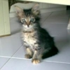 /~shared/avatars/56054493607466/avatar_1.img