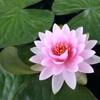 /~shared/avatars/56183782078135/avatar_1.img