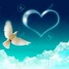 /~shared/avatars/57789977745211/avatar_1.img
