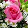 /~shared/avatars/59356875115384/avatar_1.img