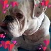 /~shared/avatars/60286661820562/avatar_1.img