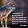 /~shared/avatars/63784761800767/avatar_1.img
