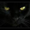 /~shared/avatars/64224048816084/avatar_1.img
