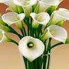 /~shared/avatars/66315734196886/avatar_1.img