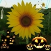 /~shared/avatars/7114386042314/avatar_1.img