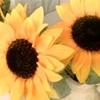 /~shared/avatars/76744152071/avatar_1.img