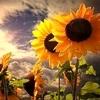 /~shared/avatars/7885477625254/avatar_1.img