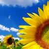 /~shared/avatars/8082632009259/avatar_1.img