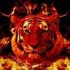 /~shared/avatars/9078699813167/avatar_1.img