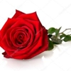 /~shared/avatars/9453636464382/avatar_1.img